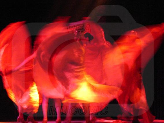 flamenko by rea