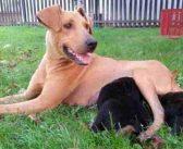 Dogs Trust u Banjaluci: Sterilisali ženku 10 dana nakon koćenja, tvrde da nisu znali za štence!