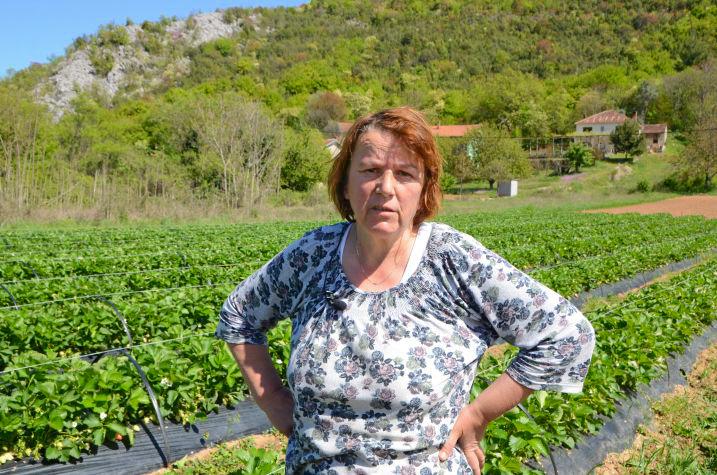 Munira Bojčić. Poljoprivrednici, Čapljina, uzgoj, jagode